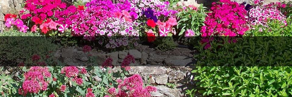 Pour profiter des plantes juste au moment où elles sont en fleurs